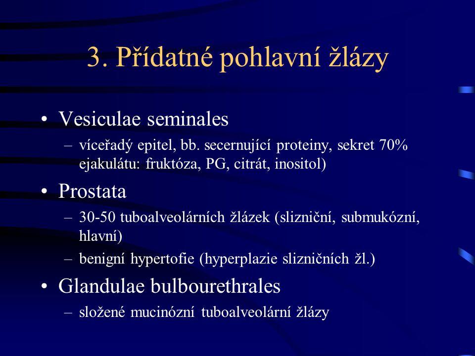 3. Přídatné pohlavní žlázy Vesiculae seminales –víceřadý epitel, bb. secernující proteiny, sekret 70% ejakulátu: fruktóza, PG, citrát, inositol) Prost