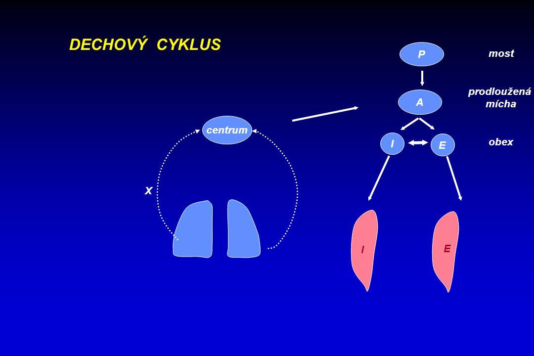 DECHOVÝ CYKLUS centrum X I E A P I E most prodloužená mícha obex