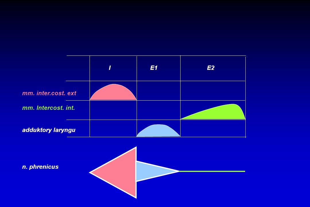 I E1 E2 mm. inter.cost. ext mm. Intercost. int. adduktory laryngu n. phrenicus