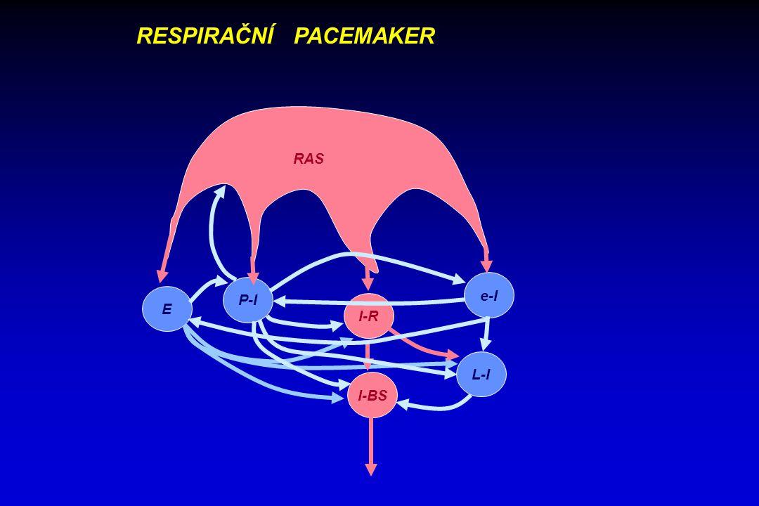 supramedulární systém eferentní neurony mechanoreceptory dýchací svaly chemoreceptory mechanika dýchání ventilace výměna plynů Centrální respirační aktivita AP neuronů Elektroneurogram Elektromyogram Dyn.