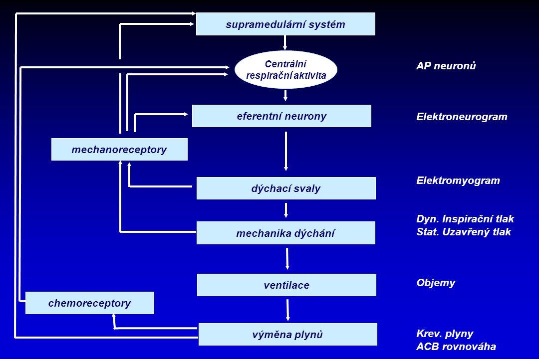 supramedulární systém eferentní neurony mechanoreceptory dýchací svaly chemoreceptory mechanika dýchání ventilace výměna plynů Centrální respirační ak