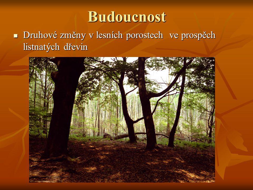 Budoucnost Druhové změny v lesních porostech ve prospěch listnatých dřevin Druhové změny v lesních porostech ve prospěch listnatých dřevin