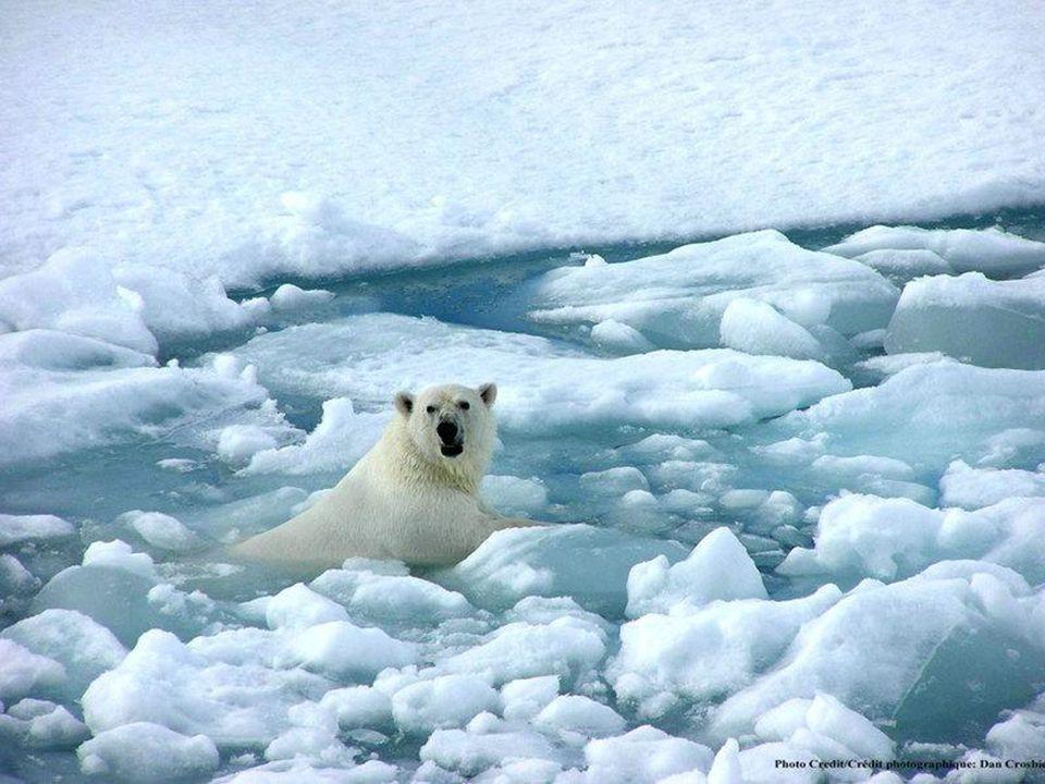 Změny klimatu Na globální oteplování ukazují nejen přímá měření teploty, ale nepřímo i další jevy.