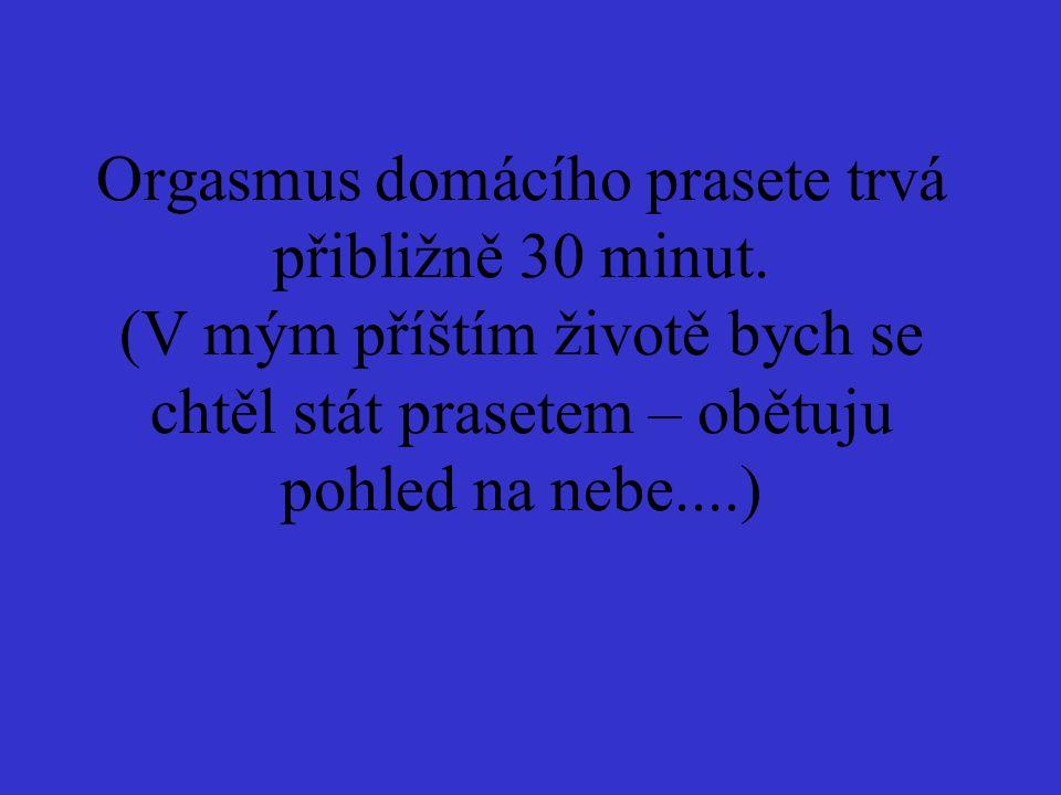 Orgasmus domácího prasete trvá přibližně 30 minut. (V mým příštím životě bych se chtěl stát prasetem – obětuju pohled na nebe....)