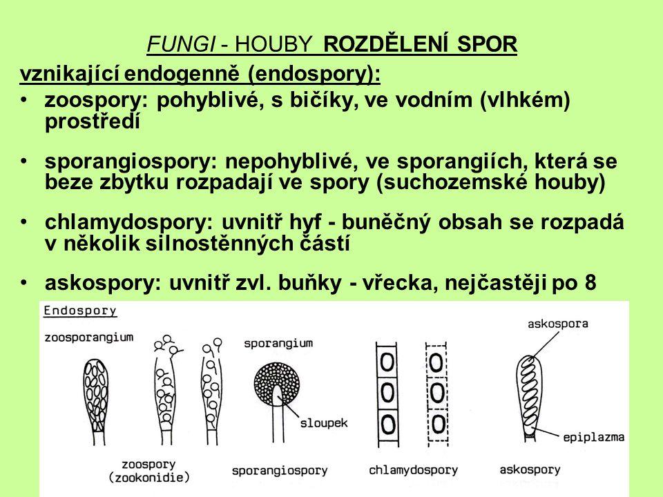 FUNGI - HOUBY ROZDĚLENÍ SPOR vznikající endogenně (endospory): zoospory: pohyblivé, s bičíky, ve vodním (vlhkém) prostředí sporangiospory: nepohyblivé