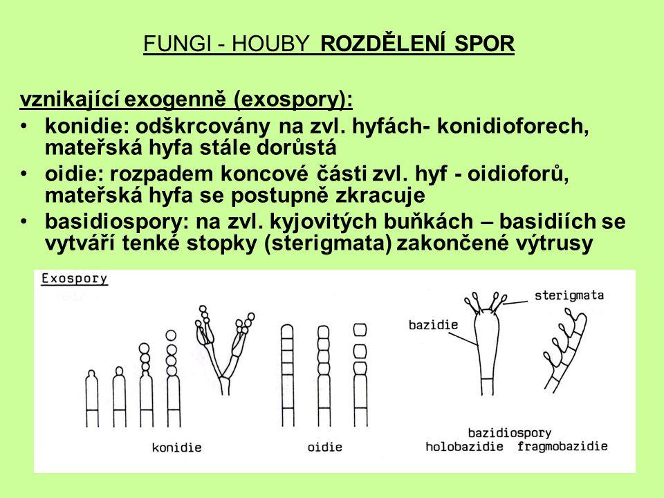 FUNGI - HOUBY ROZDĚLENÍ SPOR vznikající exogenně (exospory): konidie: odškrcovány na zvl. hyfách- konidioforech, mateřská hyfa stále dorůstá oidie: ro