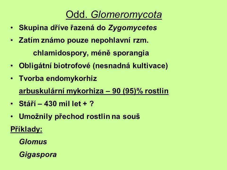 Skupina dříve řazená do Zygomycetes Zatím známo pouze nepohlavní rzm. chlamidospory, méně sporangia Obligátní biotrofové (nesnadná kultivace) Tvorba e