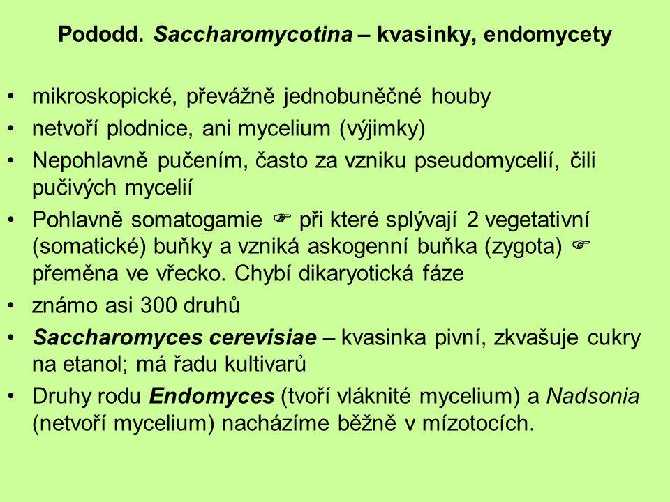 Pododd. Saccharomycotina – kvasinky, endomycety mikroskopické, převážně jednobuněčné houby netvoří plodnice, ani mycelium (výjimky) Nepohlavně pučením
