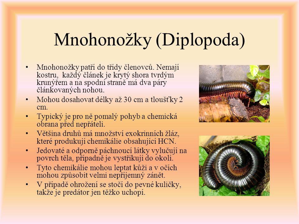 Mnohonožky (Diplopoda) Mnohonožky patří do třídy členovců. Nemají kostru, každý článek je krytý shora tvrdým krunýřem a na spodní straně má dva páry č
