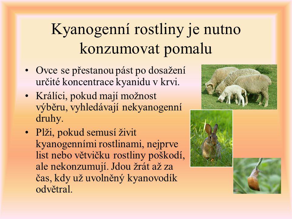 Kyanogenní rostliny je nutno konzumovat pomalu Ovce se přestanou pást po dosažení určité koncentrace kyanidu v krvi. Králíci, pokud mají možnost výběr
