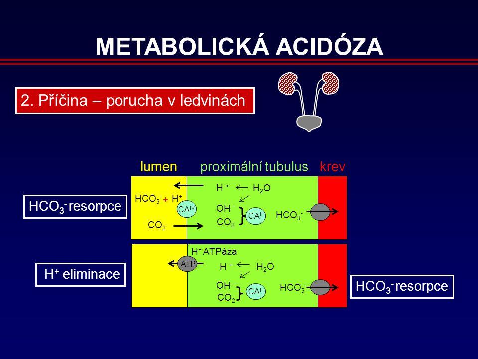 METABOLICKÁ ACIDÓZA H + eliminace proximální tubulus HCO 3 - resorpce lumenkrev CA IV HCO 3 - H+H+ CO 2 HCO 3 - H + OH - CO 2 H 2 O CA II + H + ATPáza ATP HCO 3 - H + OH - CO 2 H 2 O CA II HCO 3 - resorpce 2.