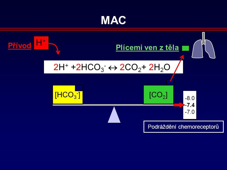 8.0 7.4 7.0 H+H+ Přívod 2H + +2HCO 3 -  2CO 2 + 2H 2 O [HCO 3 - ][CO 2 ] Plícemi ven z těla MAC Podráždění chemoreceptorů