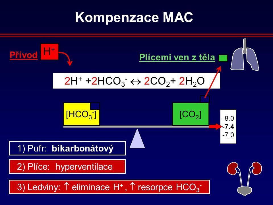 8.0 7.4 7.0 H+H+ Přívod 2H + +2HCO 3 -  2CO 2 + 2H 2 O [HCO 3 - ][CO 2 ] Plícemi ven z těla 2) Plíce: hyperventilace 3) Ledviny:  eliminace H +,  resorpce HCO 3 - 1) Pufr: bikarbonátový Kompenzace MAC
