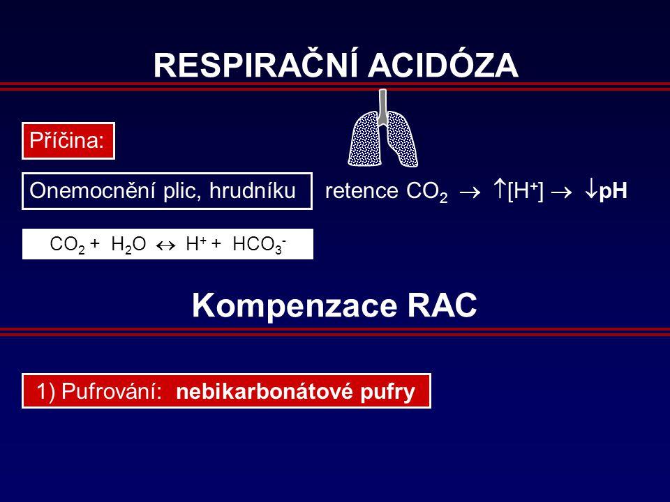 RESPIRAČNÍ ACIDÓZA Příčina: Onemocnění plic, hrudníku retence CO 2 CO 2 + H 2 O  H + + HCO 3 -   [H + ]   pH Kompenzace RAC 1) Pufrování: nebikarbonátové pufry