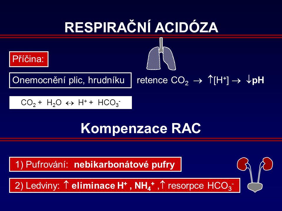 RESPIRAČNÍ ACIDÓZA Příčina: Onemocnění plic, hrudníku retence CO 2 CO 2 + H 2 O  H + + HCO 3 -   [H + ]   pH Kompenzace RAC 2) Ledviny:  eliminace H +, NH 4 +,  resorpce HCO 3 - 1) Pufrování: nebikarbonátové pufry