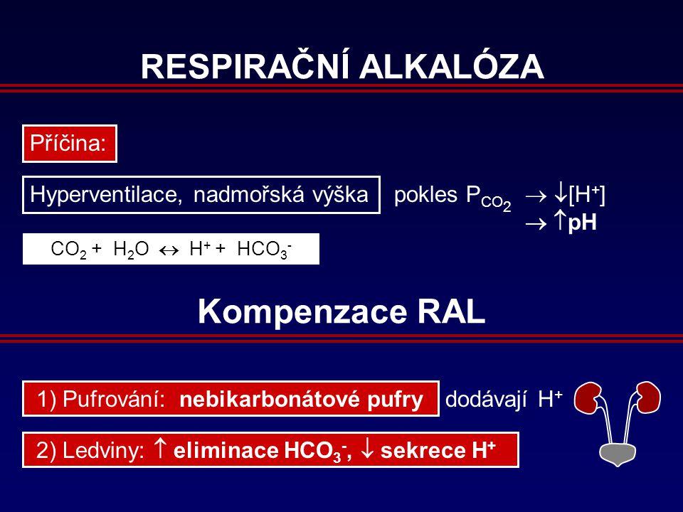 RESPIRAČNÍ ALKALÓZA Příčina: Hyperventilace, nadmořská výška pokles P CO 2   [H + ]   pH CO 2 + H 2 O  H + + HCO 3 - Kompenzace RAL 2) Ledviny:  eliminace HCO 3 -,  sekrece H + 1) Pufrování: nebikarbonátové pufry dodávají H +