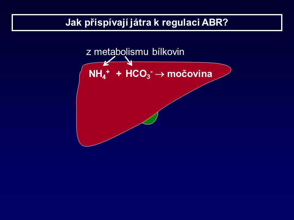 NH 4 + + HCO 3 -  močovina z metabolismu bílkovin