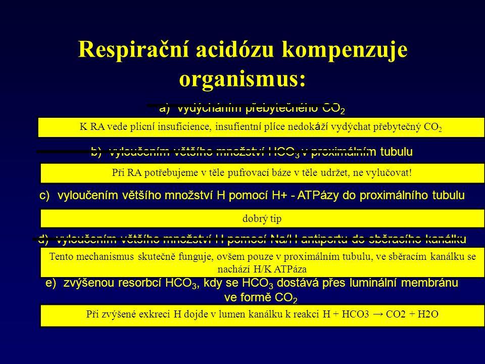 Respirační acidózu kompenzuje organismus: K RA vede plicn í insuficience, insufientn í pl í ce nedok á ž í vydýchat přebytečný CO 2 Při RA potřebujeme v těle pufrovací báze v těle udržet, ne vylučovat.