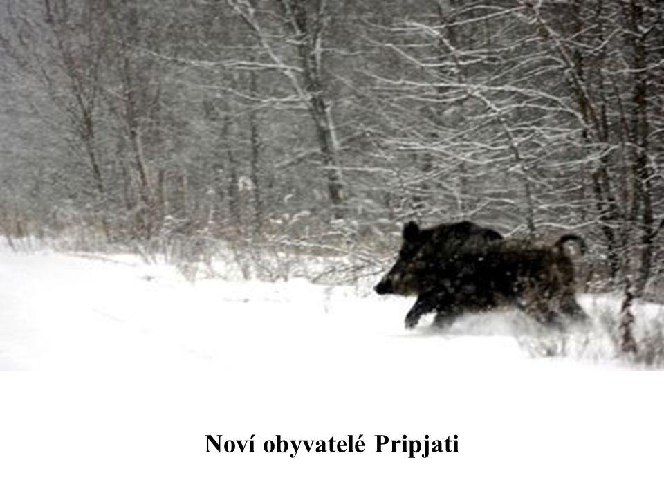 Noví obyvatelé Pripjati