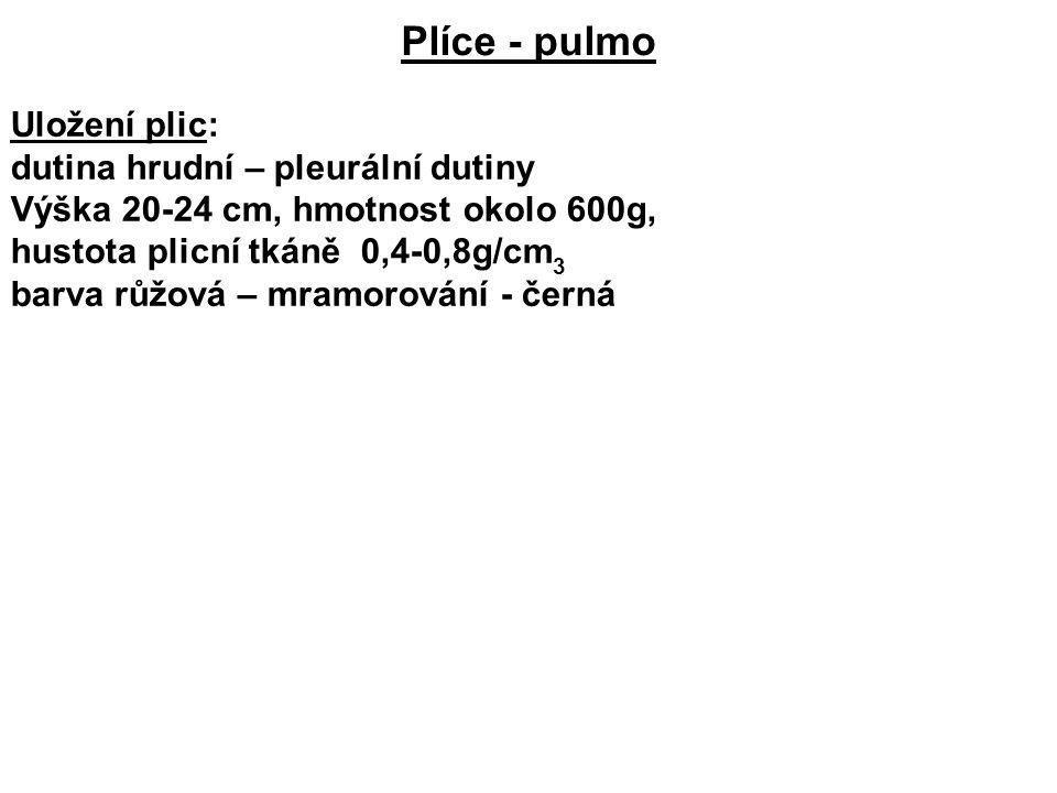 Plíce - pulmo Uložení plic: dutina hrudní – pleurální dutiny Výška 20-24 cm, hmotnost okolo 600g, hustota plicní tkáně 0,4-0,8g/cm 3 barva růžová – mr