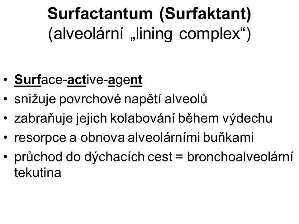 """Surfactantum (Surfaktant) (alveolární """"lining complex"""") Surface-active-agent snižuje povrchové napětí alveolů zabraňuje jejich kolabování během výdech"""