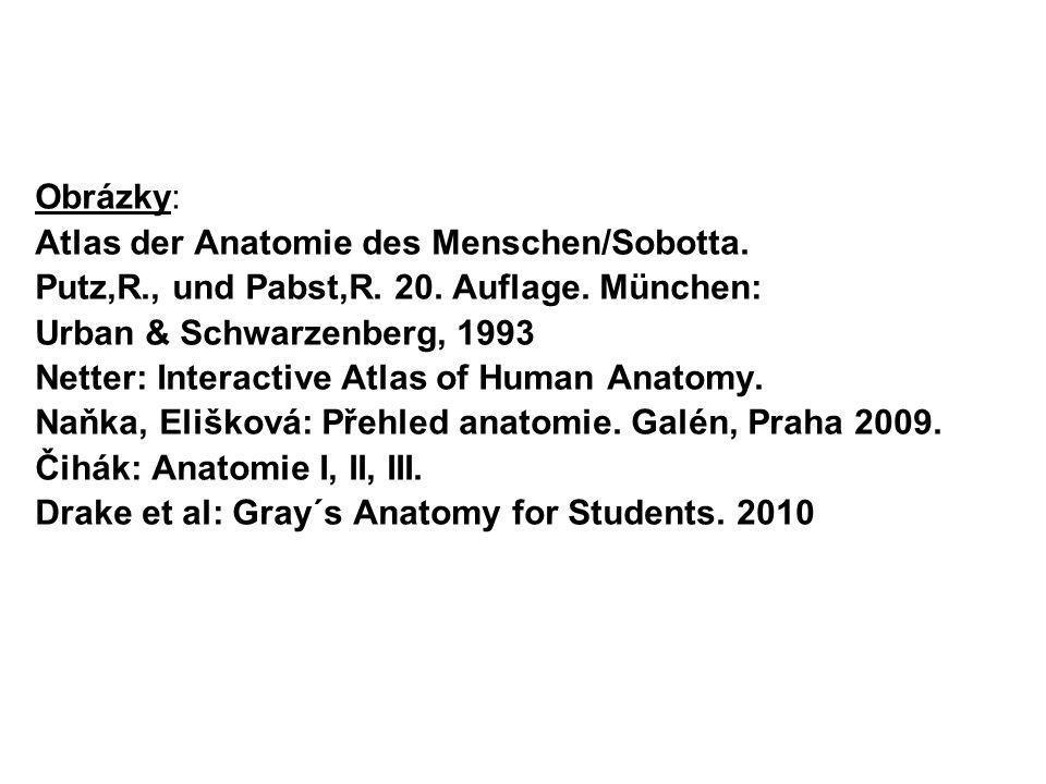 Obrázky: Atlas der Anatomie des Menschen/Sobotta. Putz,R., und Pabst,R. 20. Auflage. München: Urban & Schwarzenberg, 1993 Netter: Interactive Atlas of