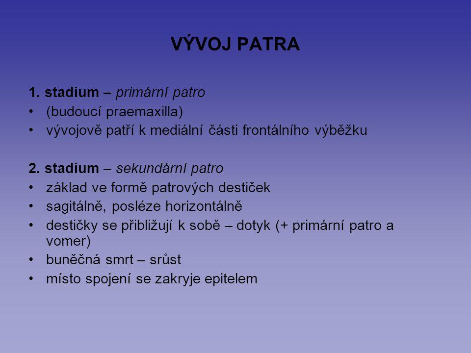 VÝVOJ PATRA 1. stadium – primární patro (budoucí praemaxilla) vývojově patří k mediální části frontálního výběžku 2. stadium – sekundární patro základ