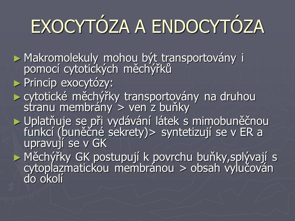 EXOCYTÓZA A ENDOCYTÓZA ► Makromolekuly mohou být transportovány i pomocí cytotických měchýřků ► Princip exocytózy: ► cytotické měchýřky transportovány na druhou stranu membrány > ven z buňky ► Uplatňuje se při vydávání látek s mimobuněčnou funkcí (buněčné sekrety)> syntetizují se v ER a upravují se v GK ► Měchýřky GK postupují k povrchu buňky,splývají s cytoplazmatickou membránou > obsah vylučován do okolí