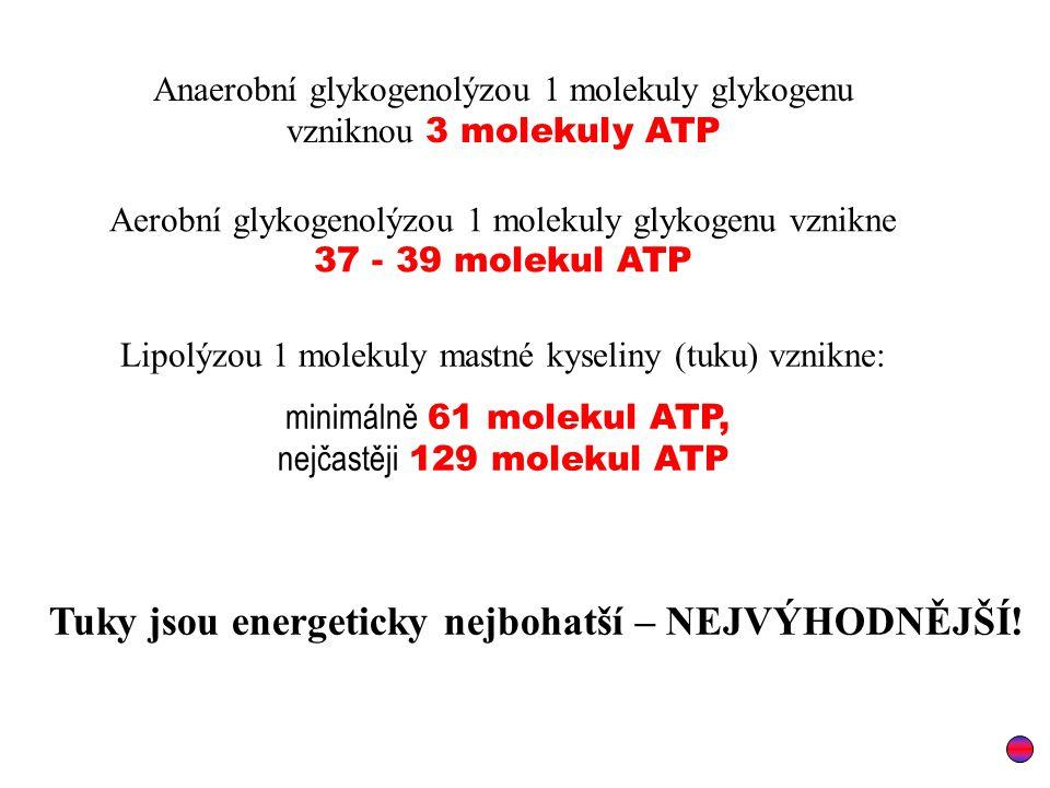 Anaerobní glykogenolýzou 1 molekuly glykogenu vzniknou 3 molekuly ATP Aerobní glykogenolýzou 1 molekuly glykogenu vznikne 37 - 39 molekul ATP Lipolýzou 1 molekuly mastné kyseliny (tuku) vznikne: minimálně 61 molekul ATP, nejčastěji 129 molekul ATP Tuky jsou energeticky nejbohatší – NEJVÝHODNĚJŠÍ!