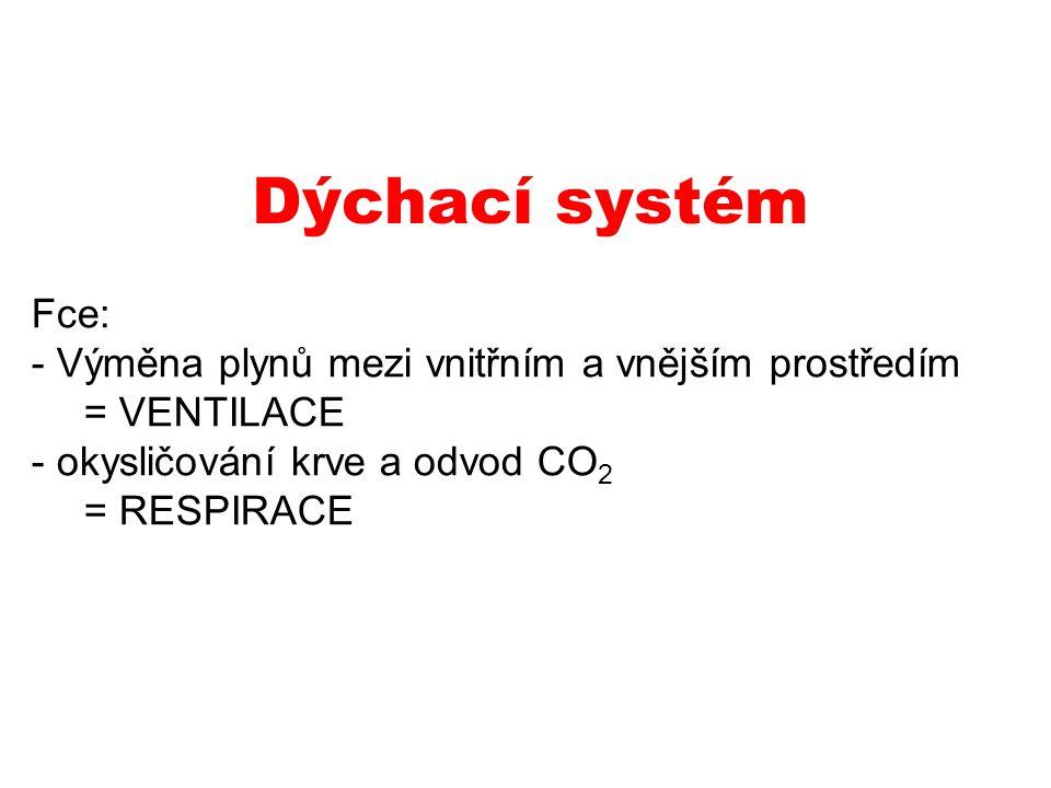 Dýchací systém Fce: - Výměna plynů mezi vnitřním a vnějším prostředím = VENTILACE - okysličování krve a odvod CO 2 = RESPIRACE