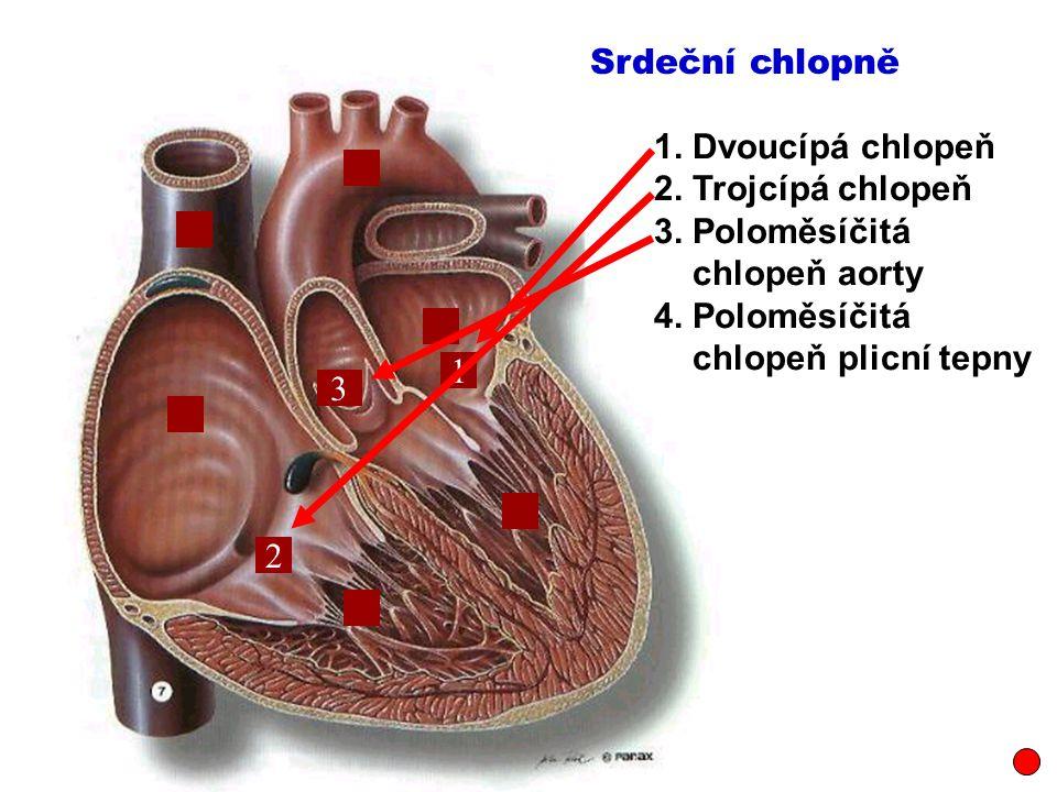 1.Dvoucípá chlopeň 2. Trojcípá chlopeň 3. Poloměsíčitá chlopeň aorty 4.