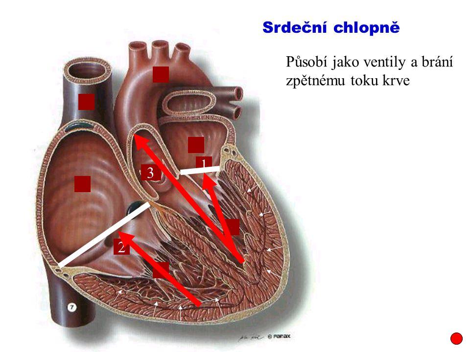 1 2 3 Působí jako ventily a brání zpětnému toku krve