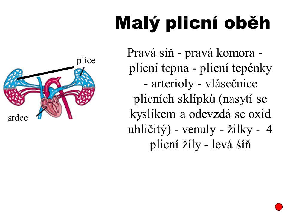 Malý plicní oběh Pravá síň - pravá komora - plicní tepna - plicní tepénky - arterioly - vlásečnice plicních sklípků (nasytí se kyslíkem a odevzdá se oxid uhličitý) - venuly - žilky - 4 plicní žíly - levá śíň plíce srdce