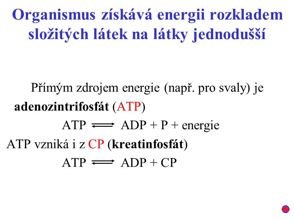 Organismus získává energii rozkladem složitých látek na látky jednodušší Přímým zdrojem energie (např. pro svaly) je adenozintrifosfát (ATP) ATP ADP +