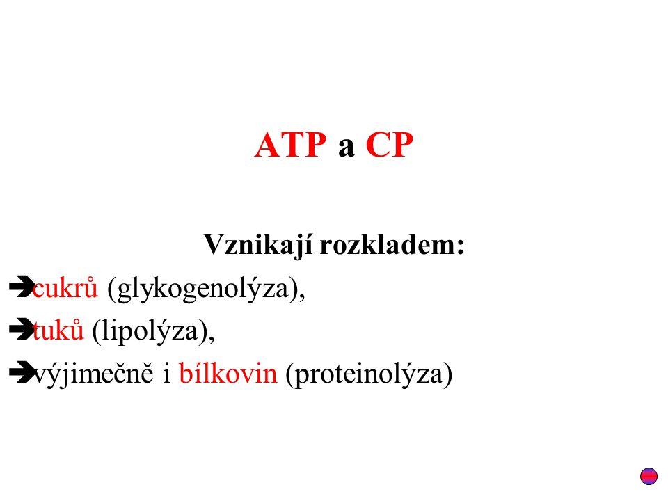 ATP a CP Vznikají rozkladem:  cukrů (glykogenolýza),  tuků (lipolýza),  výjimečně i bílkovin (proteinolýza)
