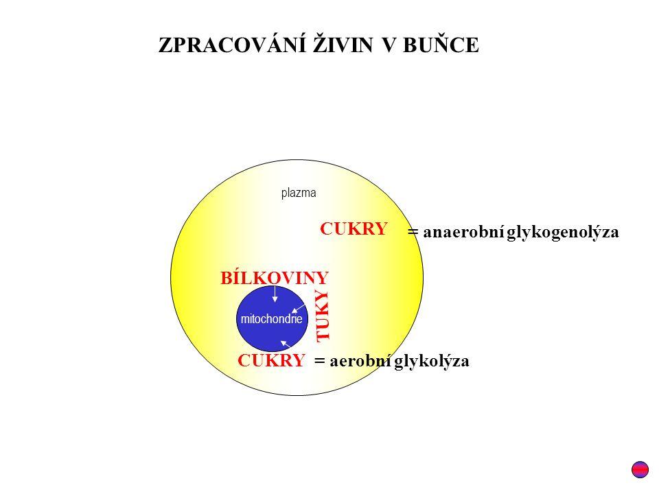 mitochondrie plazma CUKRY TUKY BÍLKOVINY ZPRACOVÁNÍ ŽIVIN V BUŇCE = anaerobní glykogenolýza = aerobní glykolýza