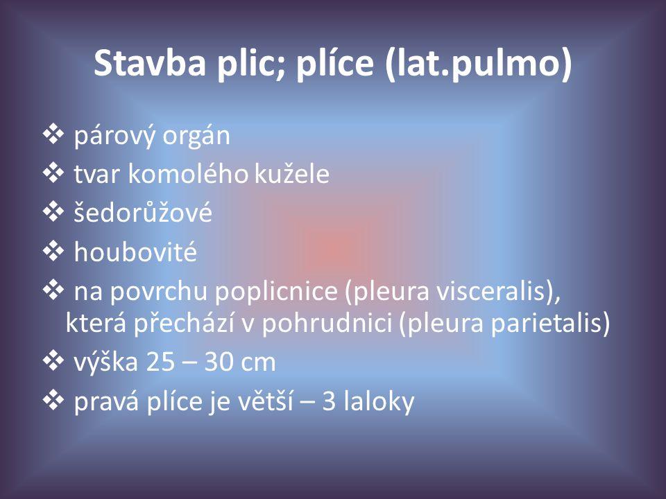 Stavba plic; plíce (lat.pulmo)  párový orgán  tvar komolého kužele  šedorůžové  houbovité  na povrchu poplicnice (pleura visceralis), která přechází v pohrudnici (pleura parietalis)  výška 25 – 30 cm  pravá plíce je větší – 3 laloky