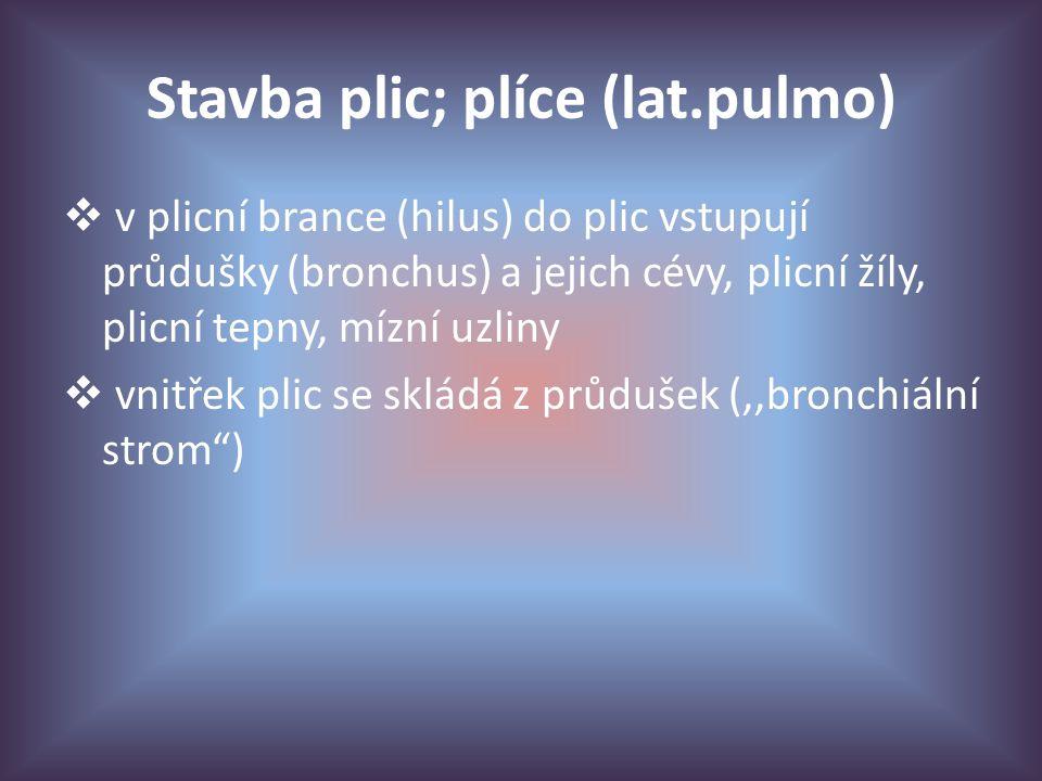 Stavba plic; plíce (lat.pulmo)  v plicní brance (hilus) do plic vstupují průdušky (bronchus) a jejich cévy, plicní žíly, plicní tepny, mízní uzliny  vnitřek plic se skládá z průdušek (,,bronchiální strom )