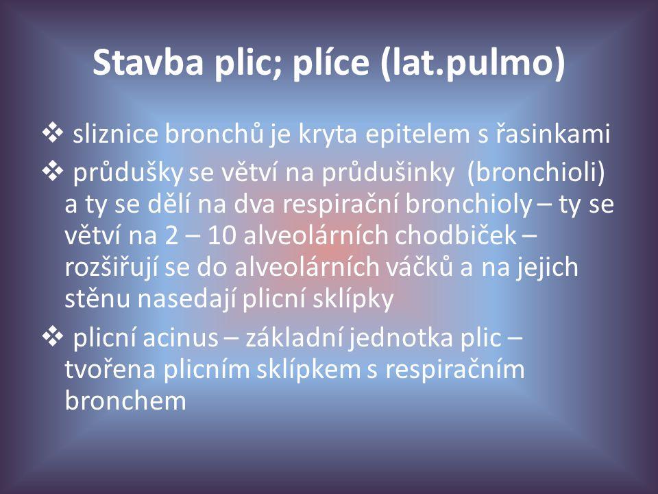 Stavba plic; plíce (lat.pulmo)  sliznice bronchů je kryta epitelem s řasinkami  průdušky se větví na průdušinky (bronchioli) a ty se dělí na dva respirační bronchioly – ty se větví na 2 – 10 alveolárních chodbiček – rozšiřují se do alveolárních váčků a na jejich stěnu nasedají plicní sklípky  plicní acinus – základní jednotka plic – tvořena plicním sklípkem s respiračním bronchem