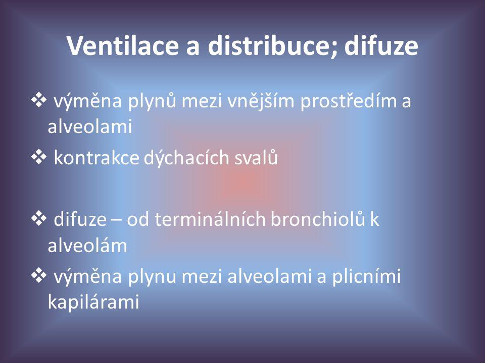 Ventilace a distribuce; difuze  výměna plynů mezi vnějším prostředím a alveolami  kontrakce dýchacích svalů  difuze – od terminálních bronchiolů k alveolám  výměna plynu mezi alveolami a plicními kapilárami