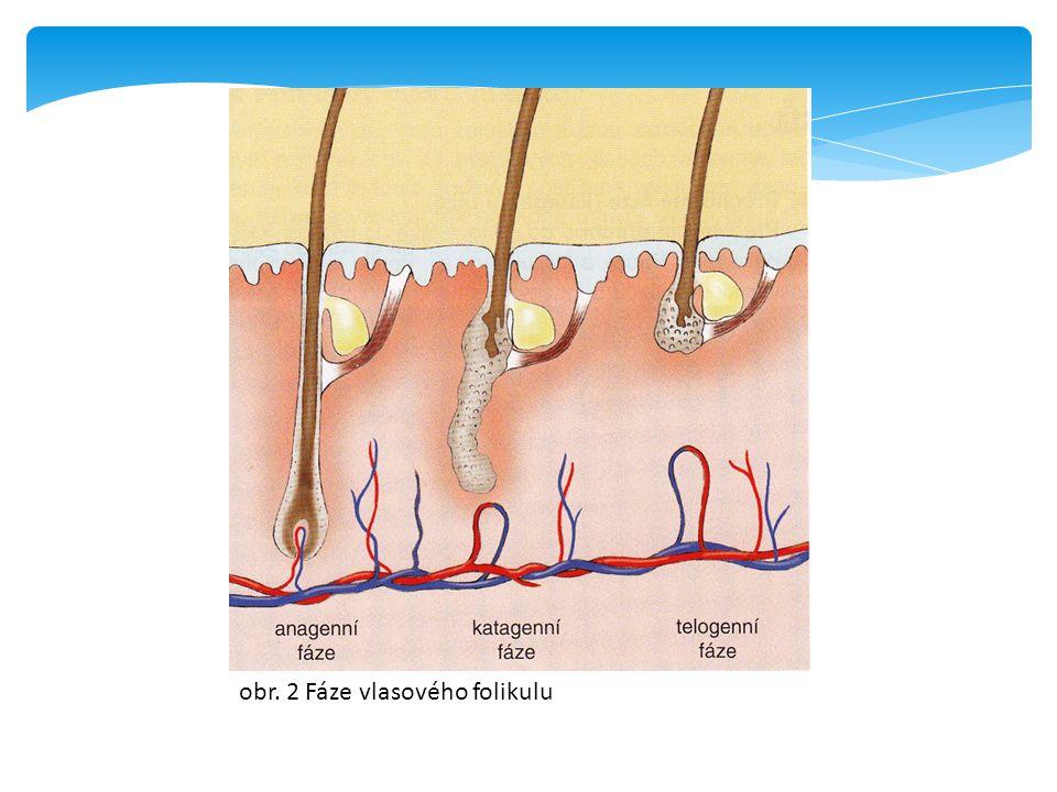 Živý a mrtvý vlas  Živý vlas lze rozeznat od mrtvého vlasu podle cibulky  Živý vlas má dobře vyvinutou cibulku, která přiléhá těsně k papile, v míšku je pevně přichycen  Rozlišit živý a mrtvý vlas lze pouze pod mikroskopem  Živý vlas má cibulku sklovitou a lesklou  Mrtvý vlas má protáhlou a zmenšenou cibulku s vláknitými konci