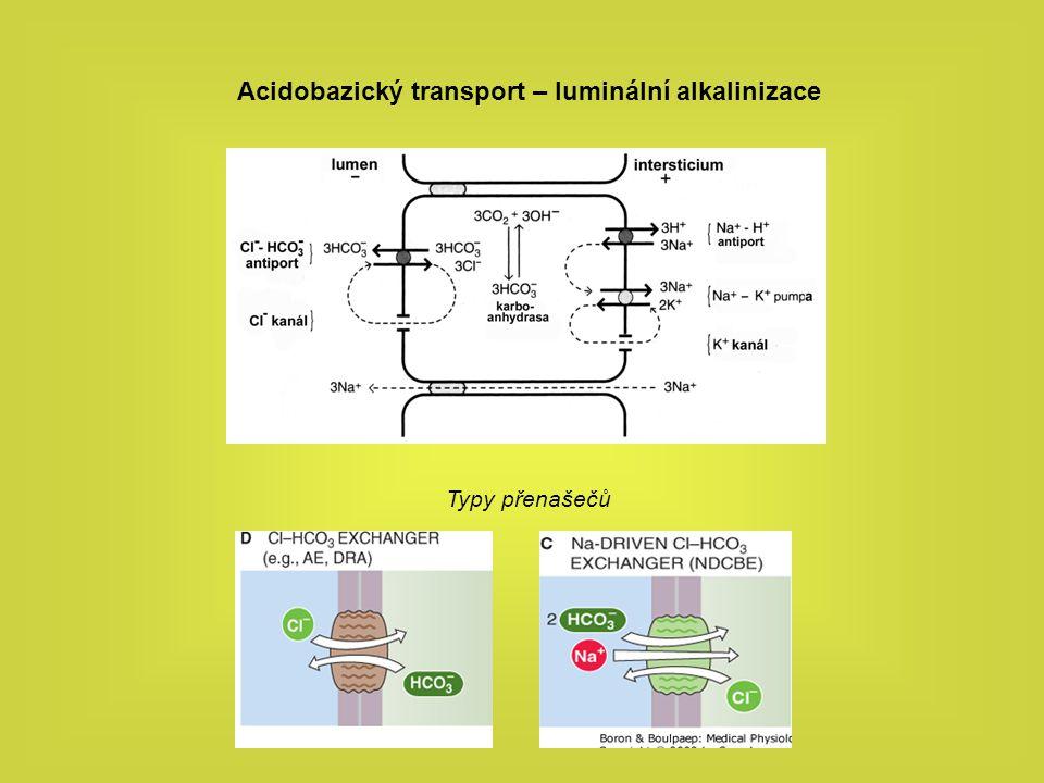 Acidobazický transport – luminální alkalinizace Typy přenašečů
