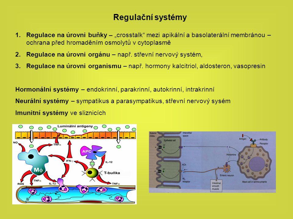 """Regulační systémy 1.Regulace na úrovni buňky – """"crosstalk"""" mezi apikální a basolaterální membránou – ochrana před hromaděním osmolytů v cytoplasmě 2.R"""