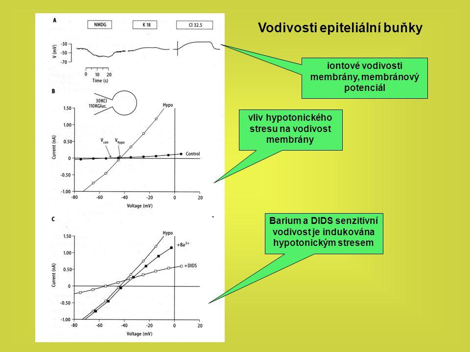 Vodivosti epiteliální buňky vliv hypotonického stresu na vodivost membrány iontové vodivosti membrány, membránový potenciál Barium a DIDS senzitivní v