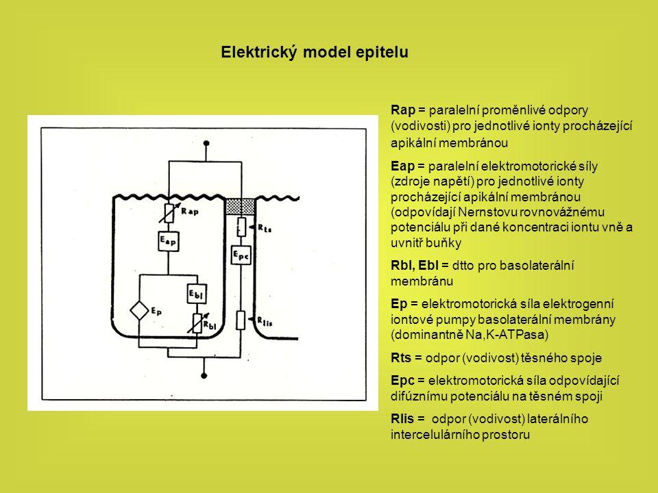 Elektrický model epitelu Rap = paralelní proměnlivé odpory (vodivosti) pro jednotlivé ionty procházející apikální membránou Eap = paralelní elektromot