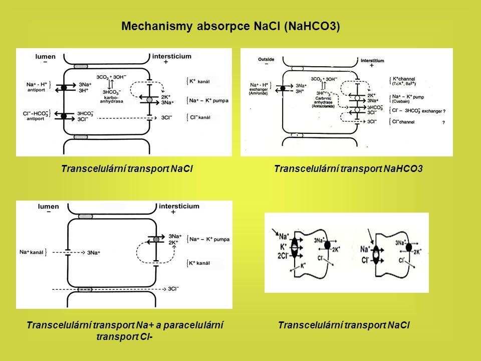 Mechanismus sekrece NaCl a vody Transcelulární transport Cl- přes NKCC kotransporter na basolaterální membráně a chloridový kanál CFTR na membráně apikální doprovázený paracelulárním transportem Na+.