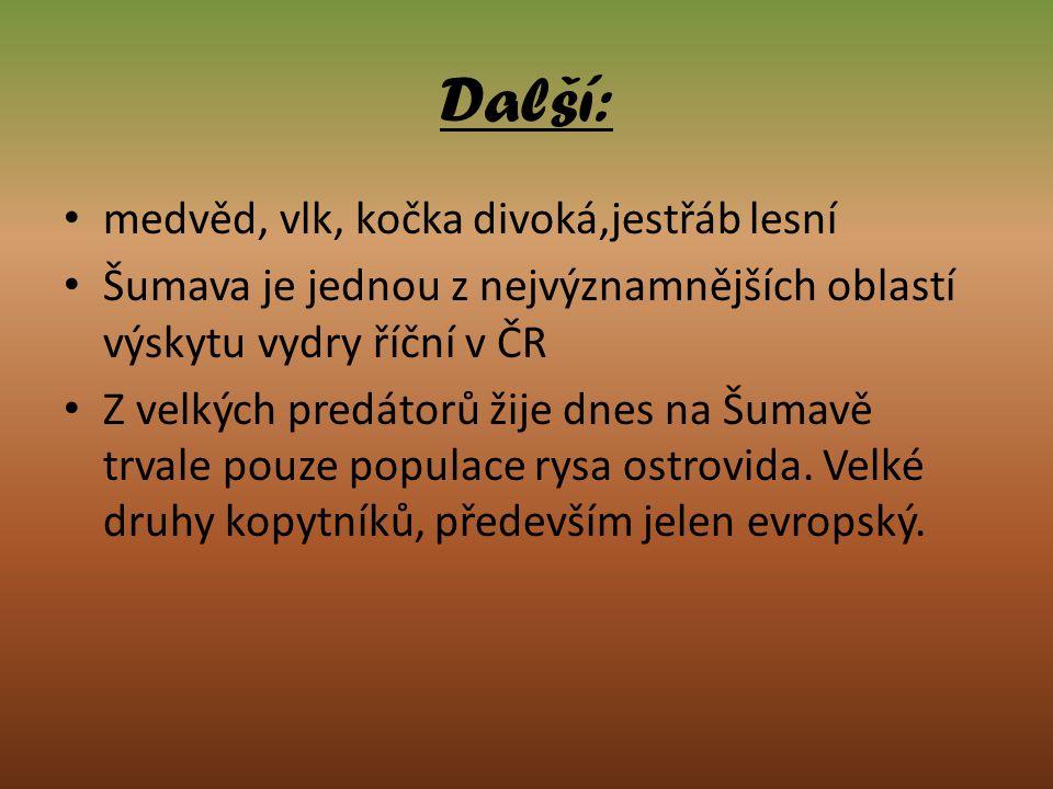 Další: medvěd, vlk, kočka divoká,jestřáb lesní Šumava je jednou z nejvýznamnějších oblastí výskytu vydry říční v ČR Z velkých predátorů žije dnes na Š