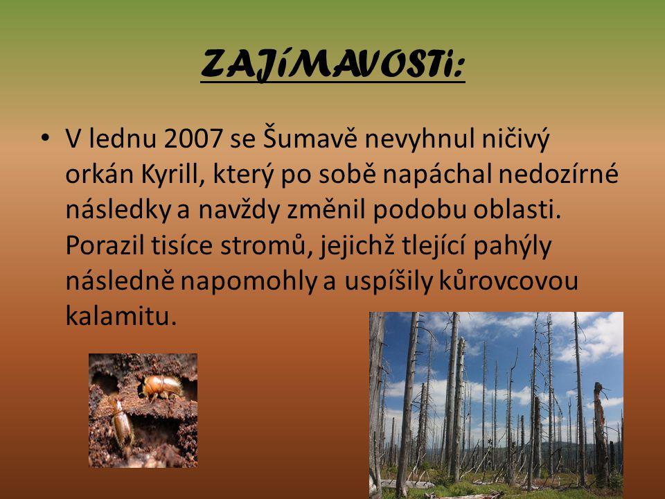 ZAJíMAVOSTi: V lednu 2007 se Šumavě nevyhnul ničivý orkán Kyrill, který po sobě napáchal nedozírné následky a navždy změnil podobu oblasti. Porazil ti