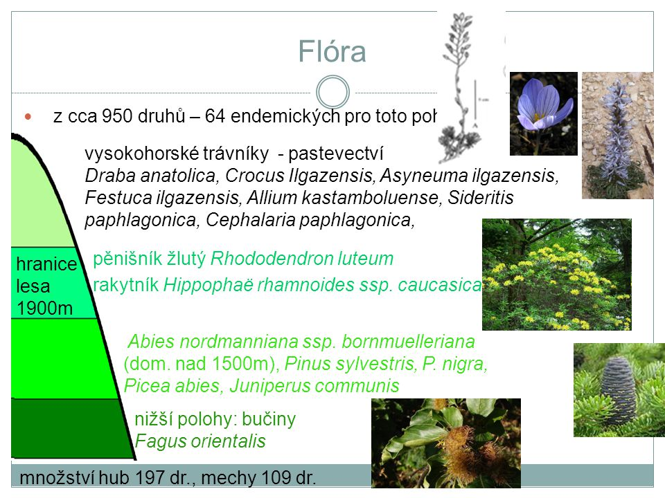 Flóra nižší polohy: bučiny Fagus orientalis Abies nordmanniana ssp. bornmuelleriana (dom. nad 1500m), Pinus sylvestris, P. nigra, Picea abies, Juniper