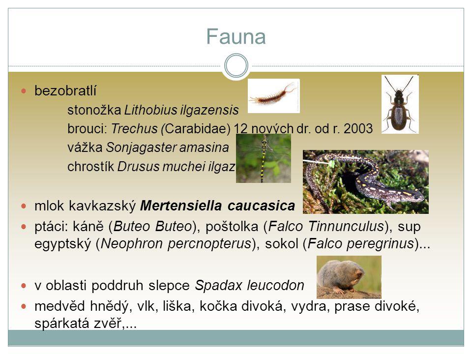 Fauna bezobratlí stonožka Lithobius ilgazensis brouci: Trechus (Carabidae) 12 nových dr. od r. 2003 vážka Sonjagaster amasina chrostík Drusus muchei i